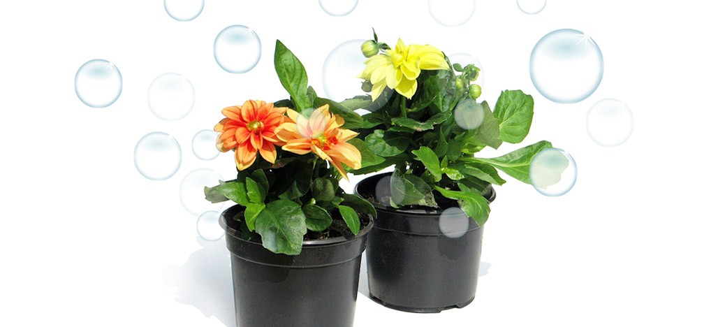 houseplants that filter toxins out of Filter your indoor air and improve your health with a few houseplants  and  formaldehyde from the air, as well as filtering out other toxins.