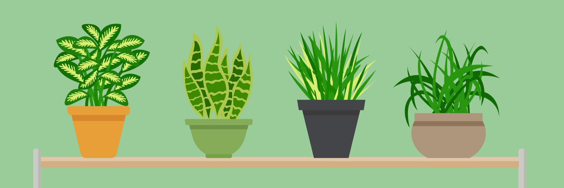 Top 20 Amazing Air-filtering Houseplants that Can Act as an Air Purifier