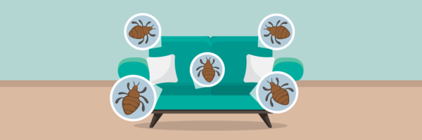 How To Get Rid Of Dust Mites In Couch
